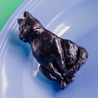 Acorn cat
